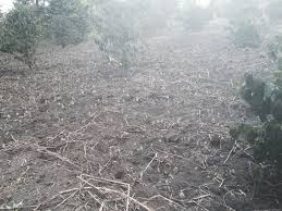 Self-proclaimed Rainmaker arrested due to prolonged drought in Kasese.